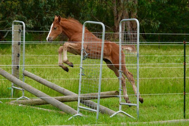 foalstoday - 1